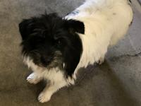 Mitzi is an adorable terrier who weighs about 16