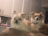 My story Mitzi & Andy - Bonded PairMitzi and Andy are