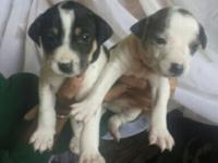 Hi, I have 6 puppies up for adoption . The puppies are
