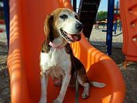 Miya's story Miya is a sweet 10 yr old beagle. She is