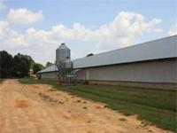 Are you looking for an good income producing poultry