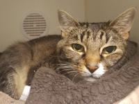 Mizu is a sweet, playful kitty looking for a