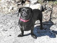 MJ's story MJ is a 5 year old 22 pound Dachshund mix.