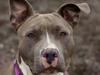 MJ is a 1 year old fun loving girl who loves car rides