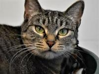 My story Hi, I'm MJ! I am a beautiful shy little gal,