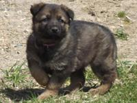 MK0206 Female...This girl is Sable and gorgeous! She