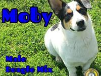 Moby's story You can fill out an adoption application