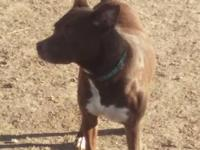 Meet Mocha a beautiful mixed breed girl just over a