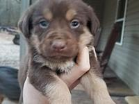 My story Puppies as of posting are 6 weeks old; they