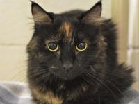 My story Mocha and Nikita (A253986) are looking for a