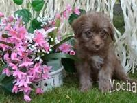 Do you think I'm sweet? I hope so! Hi, I'm Mocha! The