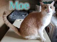 Moe's story Moe is front Declawed. He also has a
