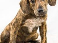 Moe's story I came to the Kentucky Humane Society from