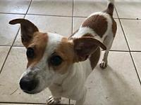 Moe's story Moe is a two year old Jack Russell mix who