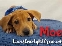 Moe! This beautiful young pup (DOB 2/2018) is searching