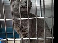 Mogli's story By adopting me today you will save the