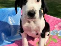 Mogly 689667 (Brynn pup)'s story **PUP NOT AT KHS -