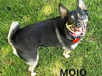 My story This little firecracker is Mojo. He is such a