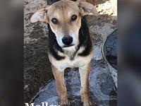 molley's story Name: Molley Breed: Shepherd Mix Date of