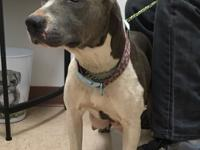 Mollie is 1 yr old, she is 48 lbs, loves everyone, all