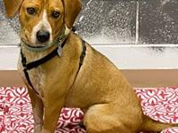 My story Hi, I'm Molly, I am a red heeler/beagle mix. I