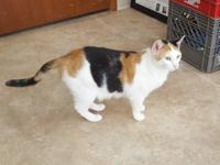 Molly is a 4-year-old Calico and her owner found