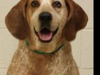 .Meet Molly! She's a 4 year old coonhound!  & weighs 69