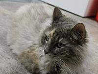 Molly's story Molly is a long haired sweet affectionate