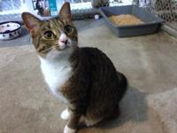 Molly's story Molly is a sweetheart. Upon arriving at