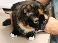 My story Molly is a beautiful and super affectionate