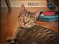 Molly's story Molly is a very, very, shy little girl.