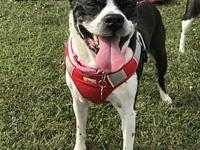 Molly Jane KY's story Molly is an eight year old female