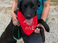 Molly's story I am a sweet girl !!! I love attention