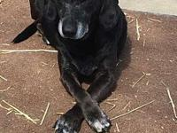 Molly's story Molly is an adult lab/daschound mix we