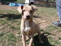 Molly is an 11 week old lab mix.   Adoption fee is