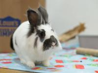 Molly is a playful, curious rabbit! She is bonded with