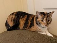Molly - loving's story Molly is a beautiful calico /