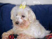 Molly's story Please contact Constance