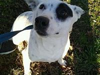 My story Molly is a 2 year old mixed breed dog. We