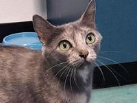 Momma Cat's story Adoption fee is $25, this Cats approx