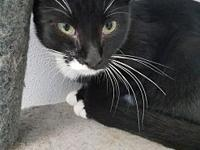 MOMMA's story MOMMA was surrendered along with her