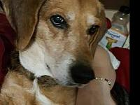 My story MOMO - F, Beagle/Coonhound Mix, 7 years old.