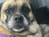 Mona Me is a 24lb 4 yo pug/shepherd mix found on the