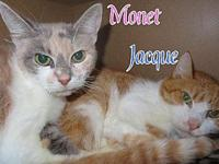 Monet's story We are 16 year old siblings in need of a