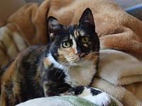 Monica's story A Most Amazing Cat! When Monica arrived
