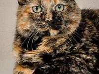 My story Monkey is a very round tortie female who might