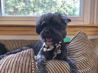 Monkey's story Hi! I am a sweet, 4 year old shih tzu