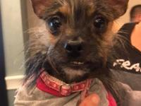 Monkey is a 2yr old yorkie mix who needs a loving