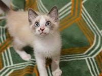 My story Monkey is a playful girl that loves to climb!