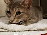 Monkey's story Monkey came to us from a shelter in NC.